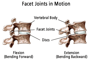 Facet Joints in motion.